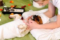 Terapia de Reiki, Equilibrio Energético y Terapia Emocional para Mascotas x 3 Sesiones
