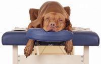 Terapia de Liberación de Emociones para Mascotas x 5 Sesiones